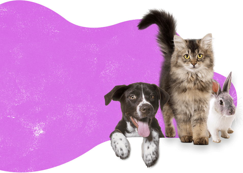 Misbourne Valley Cattery & Bunny Hotel Professional dog walking & pet visiting